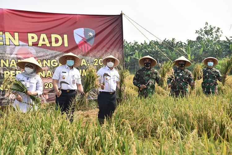 Panen Padi di Lanud Halim Perdanakusuma: Wagub DKI Apresiasi Upaya Koopsau I dan Lanud Halim