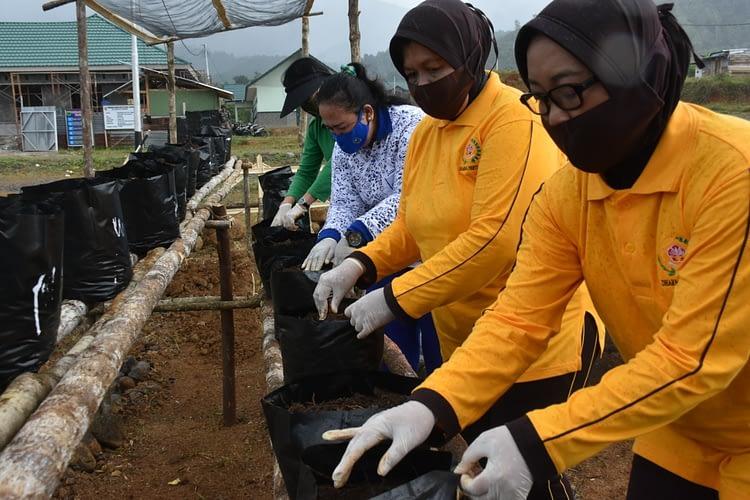 Untuk Ketahanan Pangan Hadapi Wabah Covid-19, Ketua Umum Dharma Pertiwi Daerah P Bagikan Benih Tanaman Sayuran