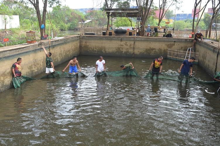 Mako Pasmar 1  Panen 1 Ton Ikan Lele Hasil Program Ketahanan Pangan
